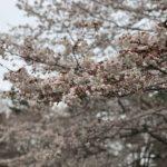 坂田ヶ池公園